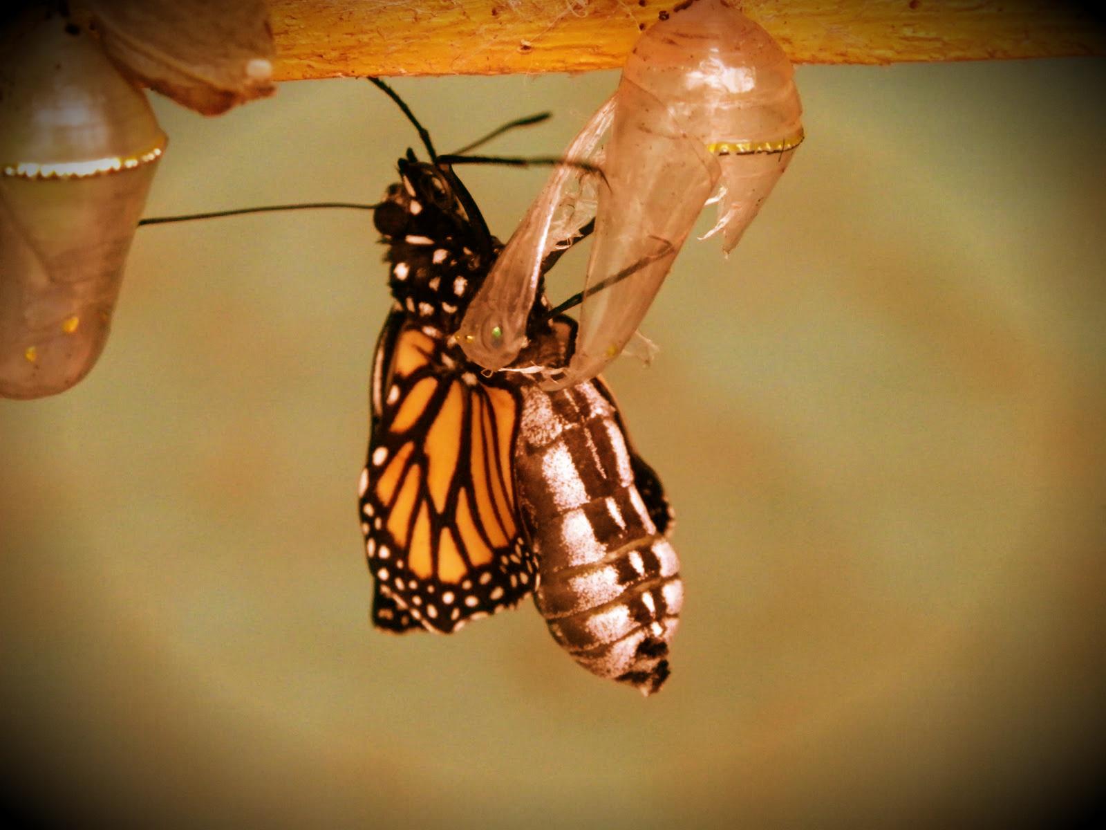 borboleta-ou-lagarta