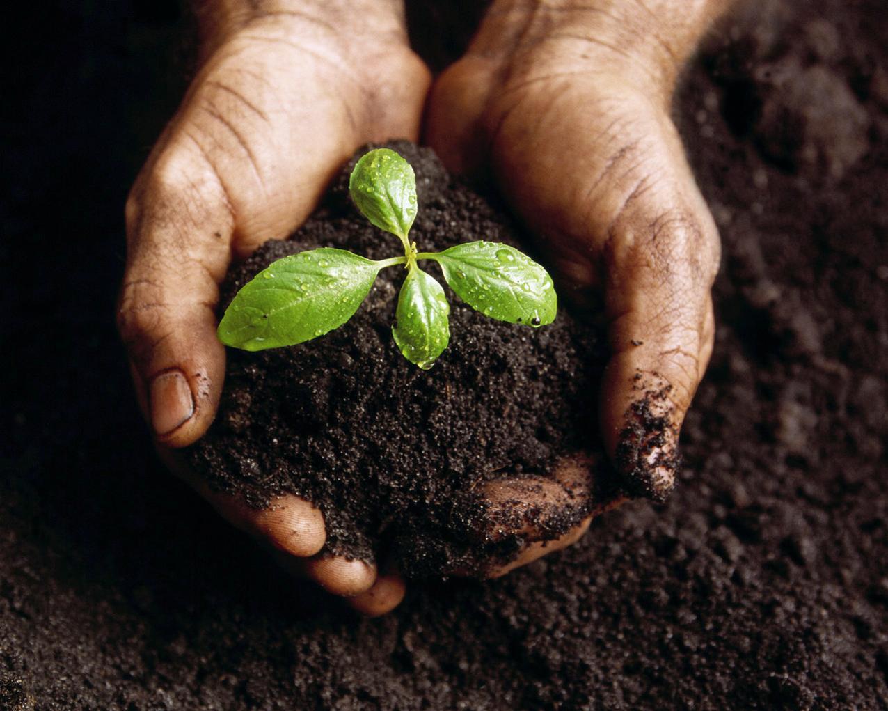 plantar_igrejas-793471