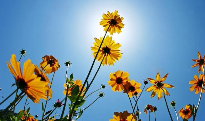 sol-flores