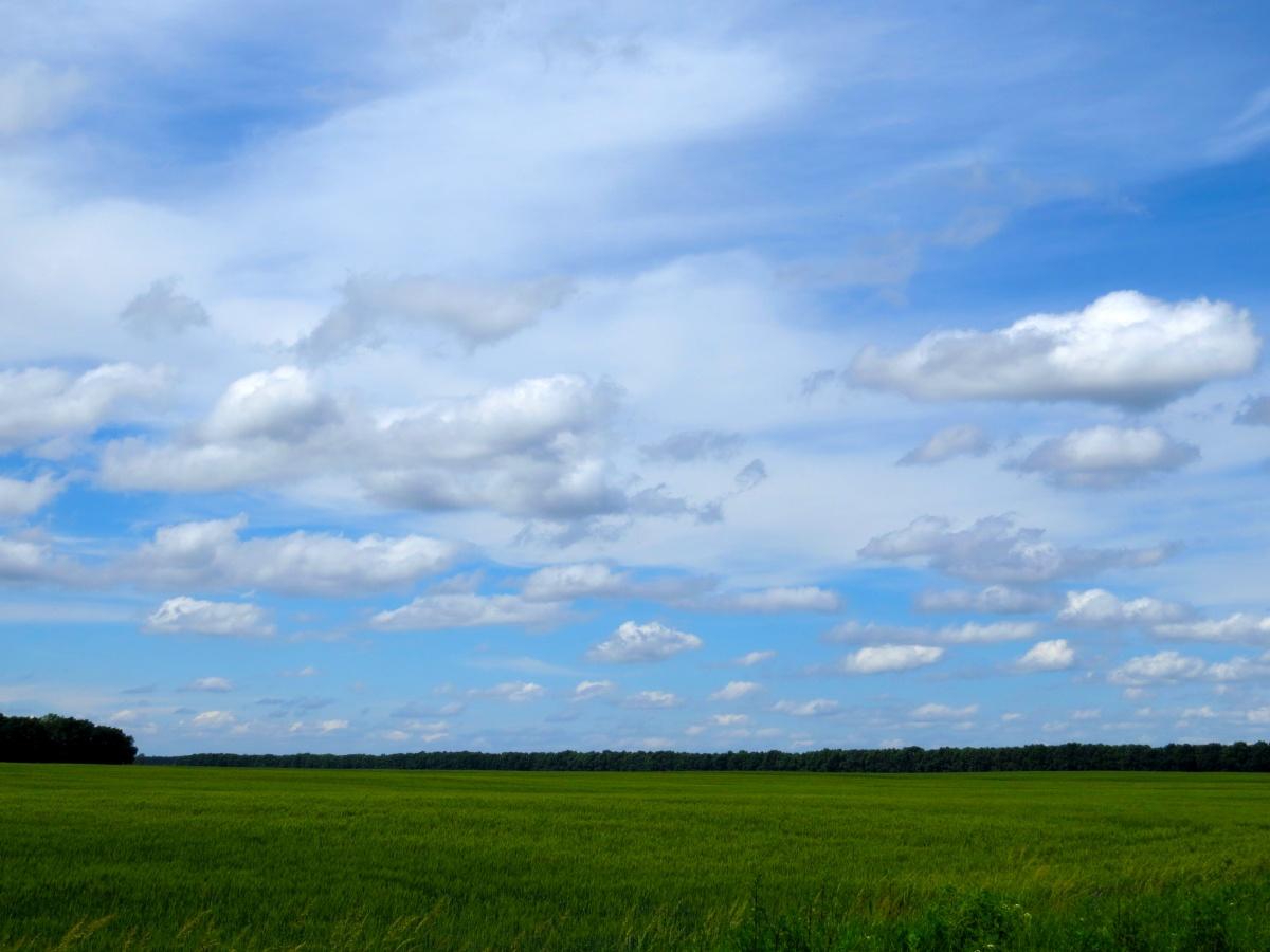 Terra ucraniana