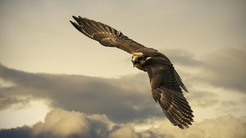 02-aguia
